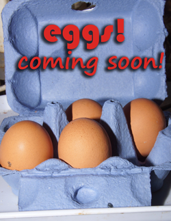 egg crate with coming soon